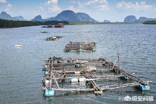 养海参盐度多少?水产养殖业专业有那些就业岗位?