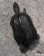 乌龟种类图片及名称价格?