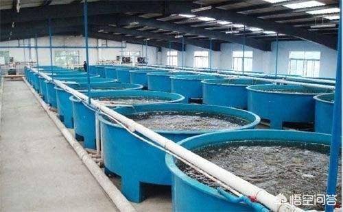 正规水产养殖公司有哪些?(图3)