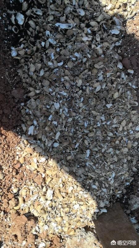 蓝宝石葡萄用什么肥料熟的快 第一年栽种的甜蜜