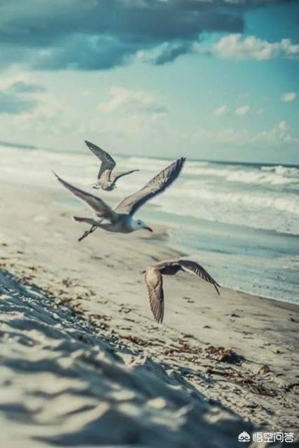 鸟与鱼式的凄美爱情,是我们所要追求的吗?描写烟花的文案?
