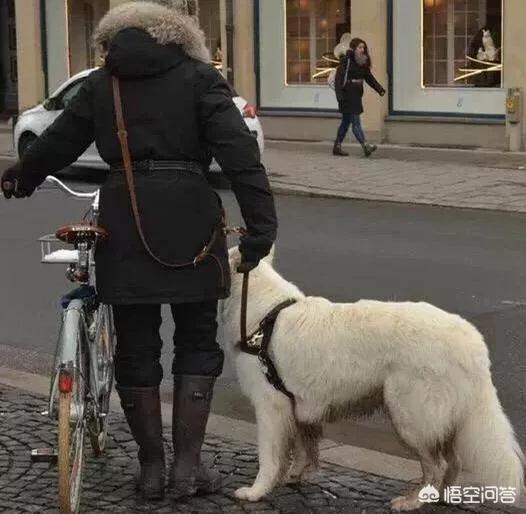 国外养狗和国内有什么区别?都体现在哪些方面