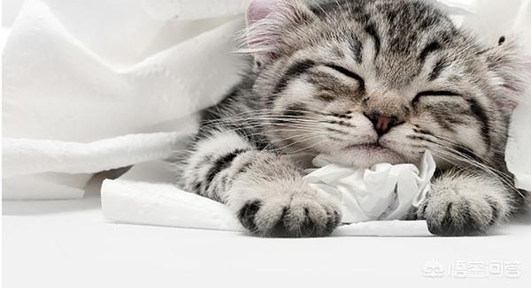 猫咪吃磨牙棒好吗:抱回来一只两个月大的