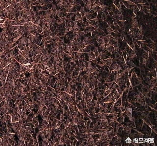 腐熟的柏树叶和籽可以养兰花吗?(柏树叶子能否养兰花)