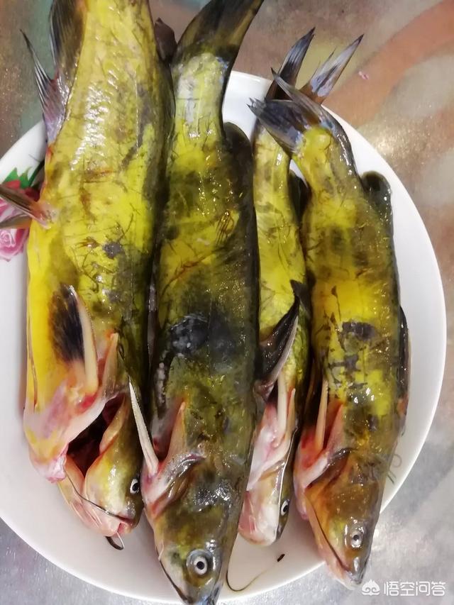 荞麦面鱼做什么菜最好吃?(荞麦面怎么做成面鱼)