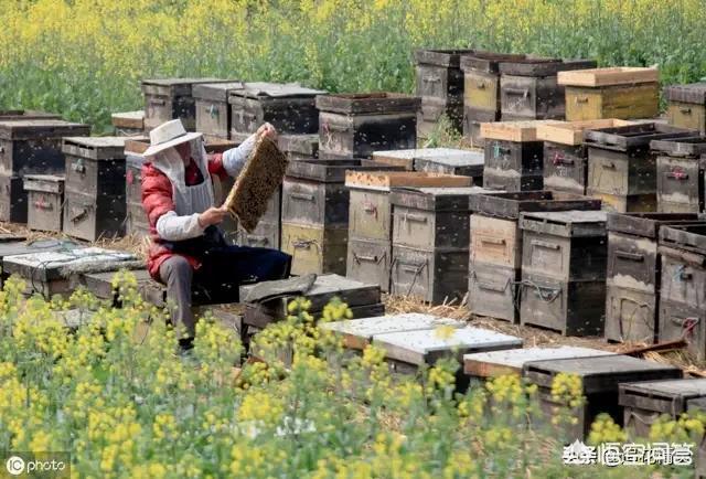 """兰州城区占道养蜂采蜜,城管队员劝其""""搬家"""""""