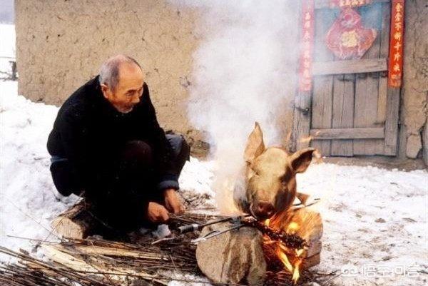 你认为猪身上哪个部位最好吃?为什么?(猪的内脏哪些最好不吃)