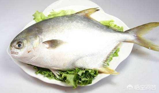 第一美食鲳鱼的做法大全?