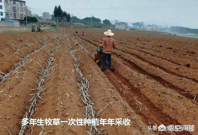 什么农作出口量最低,适合北方栽种?现在在农村养小龙虾有没有发展前景?
