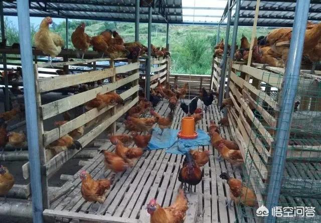 贫困地区养殖企业怎样经营?鲤鱼养殖控制技术?