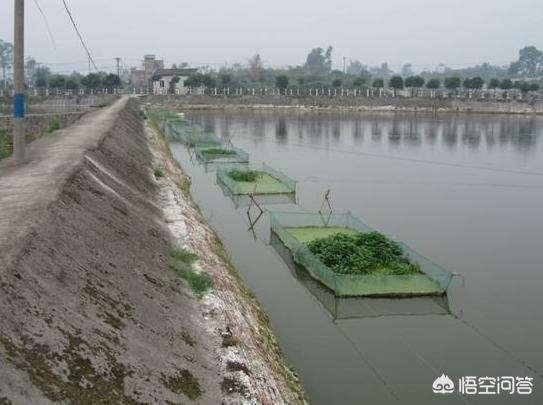 正规水产养殖公司有哪些?(图2)