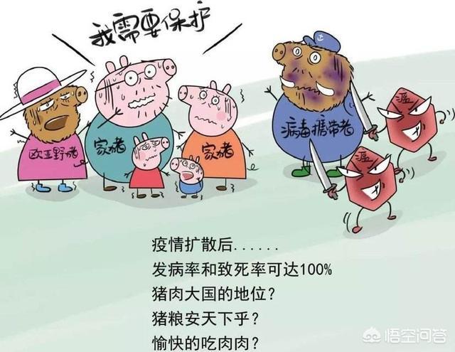 非洲猪瘟这么厉害的情况下,能不能现在入坑养