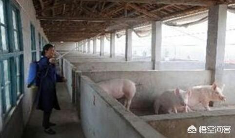 现在天气越来越热了,想给猪场里灭菌,不知道该用甚么方法好?常见的灭菌方法有哪些?大学水产养殖业具体学