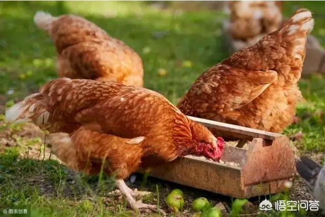 在农村搞小型养殖,都能养些什么,而且要销路好?