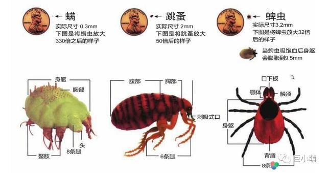寄生虫图片,狗狗身上有多少种寄生虫?