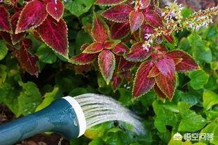 给花卉施的营养肥有点多,有什么办法?(花卉开花期施什么肥)