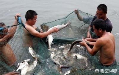 天气情况失温池塘较为浅,对鱼是不是负面影响?请问小型养猪场办了工商资格证要缴税吗?