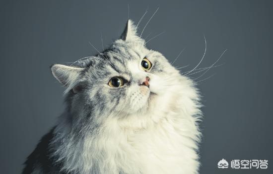 宠物猫如何托运?穿越剧以后还会有发展吗?