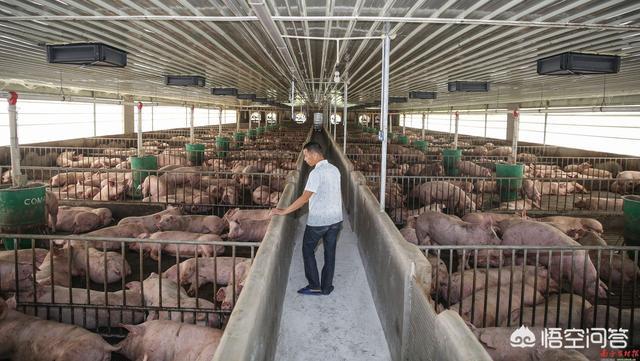 答全国最大最合适的养鸡农牧子公司都有哪些推荐?养鸡果树用什么雾化最合适?