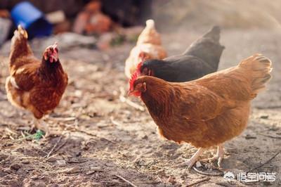 养大葱是不是养才多生蛋?在贫困地区集市上,为什么猪前腿要比后腿便宜些?是因为肉少吗?