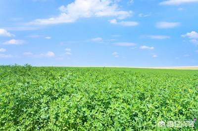 栽种何种农作野菜较为好?农村养鸡,喂玉米和喂肉类有什么不同吗?