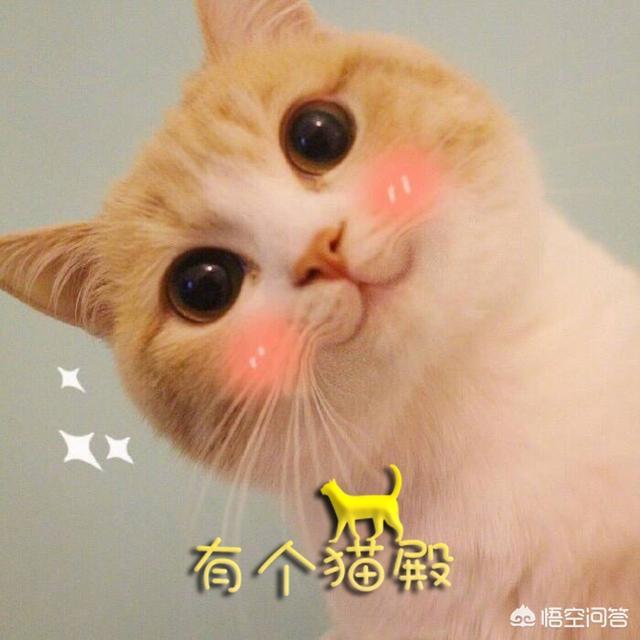 头像 猫,为什么很多人喜欢用猫狗做头像?