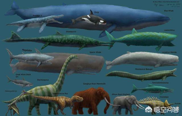 传说中几十米长的大海蛇,到底存不存在?