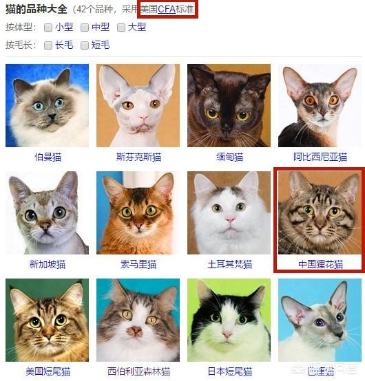 猫咪种类大全:品种猫到底是什么意思?有