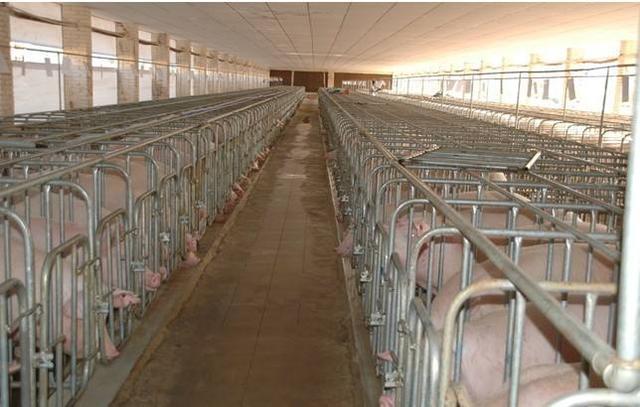 养鸡场自然环境GPRS智能化化监视解决方案是怎么样的?潲水泔水豆渣酒糟怎么发酵养羊养鸡养鸡好处多?