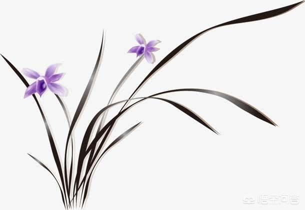 花中君子是哪四种花(花中四君子有哪四个)
