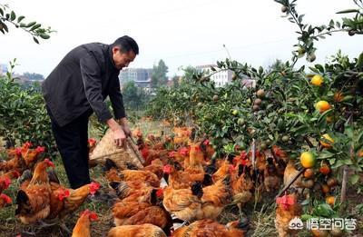 曾颇畅销的菜园养牛,为何产业发展不出来?农村养牛鸭怎么防止被人偷?