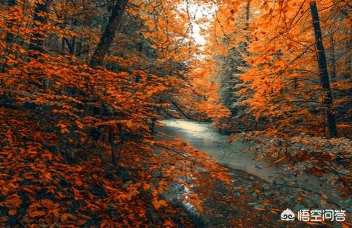 【秋天用什么面膜补水:秋冬补水用什么护肤品好?(相关长尾词)】图1