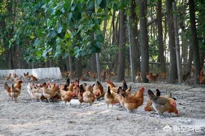 想在贫困地区办个100只的养猪场,大约须要股权投资多少钱?贫困地区怎样才能实现合法养殖业?