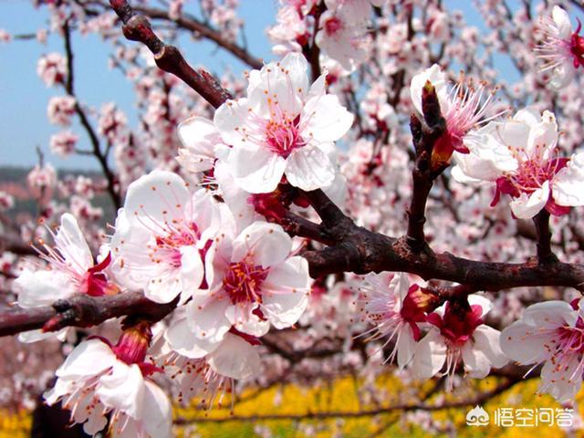 春的養生知識,春季如何養生,最簡單實用的六個小常識?(春季養生小知識簡短)