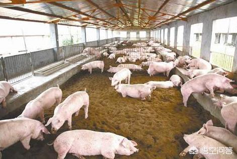 养鸡不用除牛粪猪尿、石屋非常整洁,没有恶臭,很少的蚊虫蚯蚓,请问垫料G540不一样?想在农村养羊,圈
