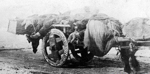 1910年鼠疫下的哈尔滨,是什么样的?