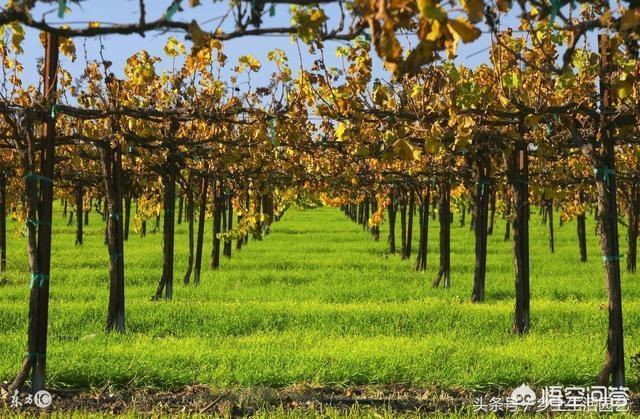 蓝莓园里适合双季什么农农作物?养猪场如何灭苍蝇和蚊子?