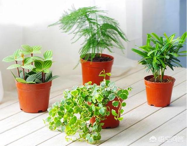 观音头像,客厅里面放什么植物比较好?