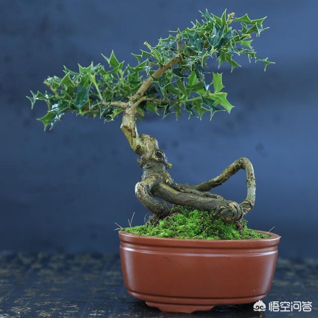 你知道这树叫什么名字吗?