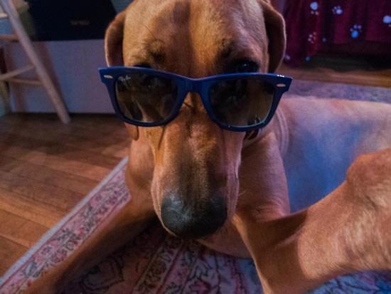 狗子图片,狗界中,哪几种狗狗颜值很高?