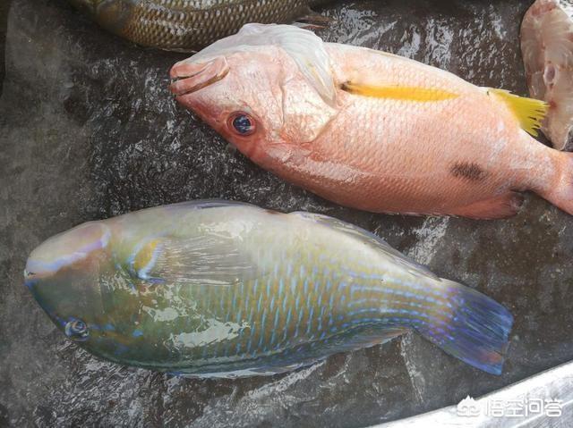 能吃的鱼大全名称图片 40种鱼类名字及图片 大家能否帮我看看图片中这些鱼都叫什么名字?怎么烹饪最合适?