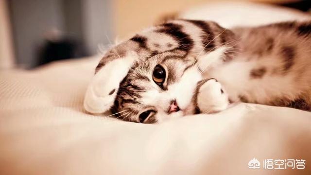 5个月的美短,想给她换猫粮,现在一直在喂比瑞吉,但是一直都有泪痕,请问什么猫粮好一点?