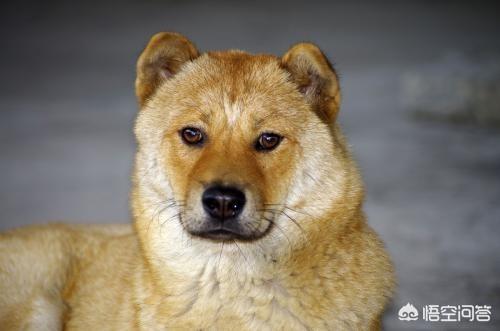 头像   狗,你们会与用狗做头像的人聊天吗?