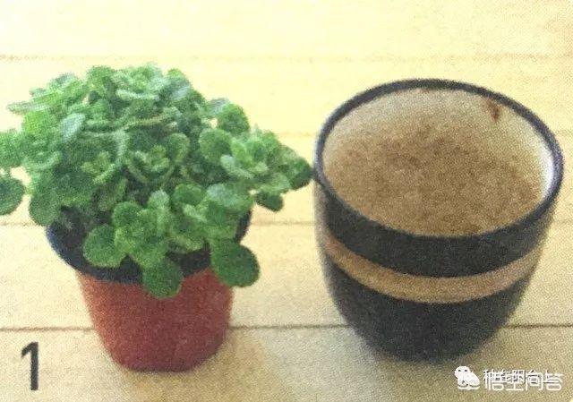 花卉倒盆和翻盆的区别是什么?(花卉倒盆的目的)