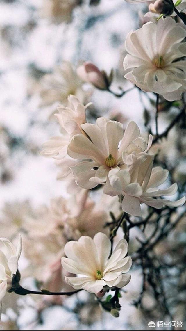壁纸头像,有哪些关于花的壁纸或者头像?