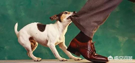 金毛突然就咬主人:狗狗为什么每次看到某个人,就追着咬呢?