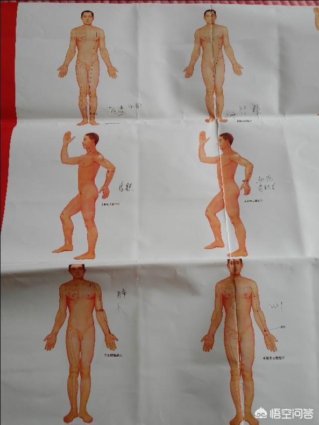 人体穴位模型(人体穴位模型四件套)