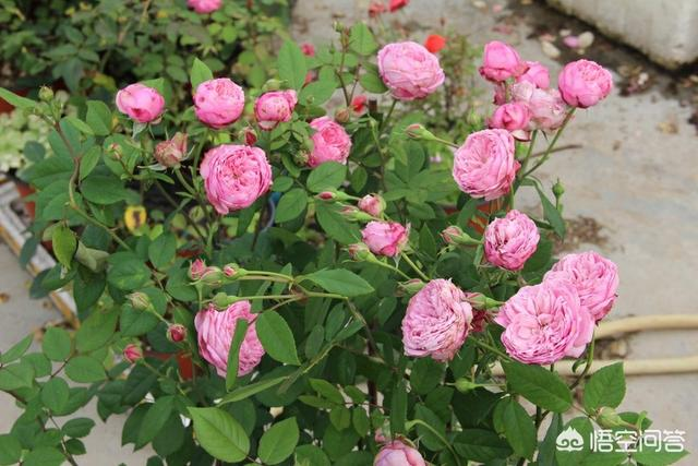 盆栽的兰花空根跟栽种基质有关系,还是跟浇水有关系?