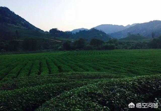 贵茶,便宜的茶与贵的茶成分有差别吗?