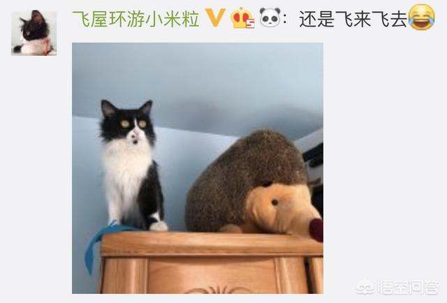 橘猫头像,猫咪绝育之后有什么变化吗?